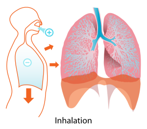 12641392491982759135Inhalation_diagram.svg.hi